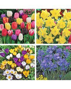 Spring Beauty Garden