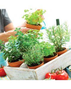 Healthy Herb Garden